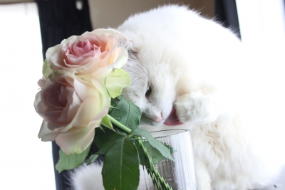 valentine1 resized