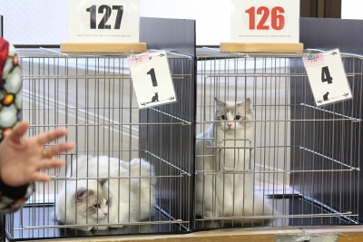 cat show8 resized