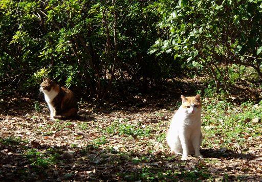 512猫の写真-3