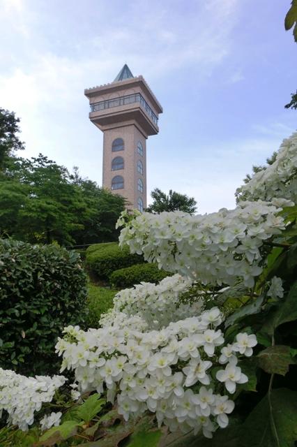 花の谷から見たグリーンタワー相模原