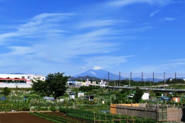 柳島からの富士山