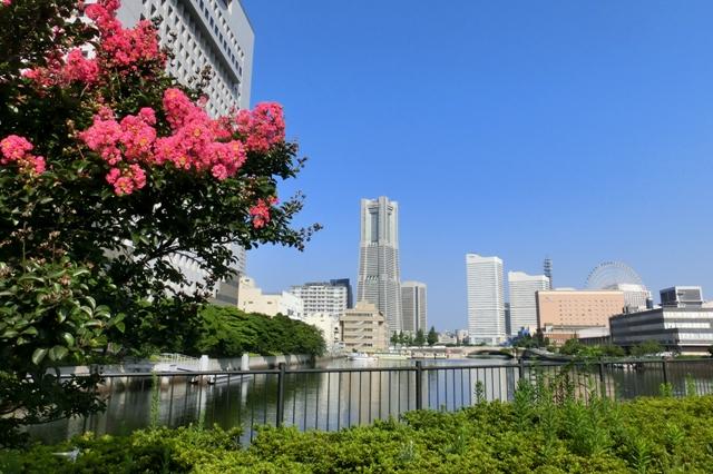 百日紅と横浜ランドマークタワー