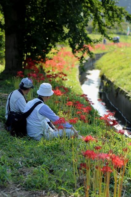 のんびりと花を愛でる二人連れ