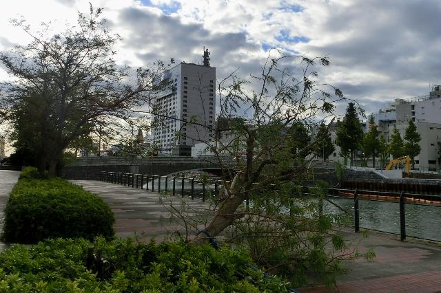 暴風で倒れた木