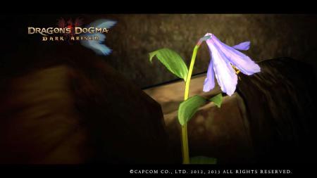 データ2    黒呪島で健気に咲いた1輪の花。