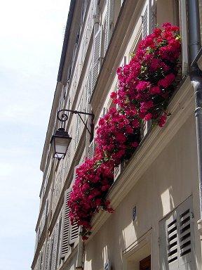アパルトマン窓辺の赤い花downsize
