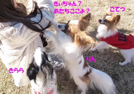 りん+きらら+こてつ