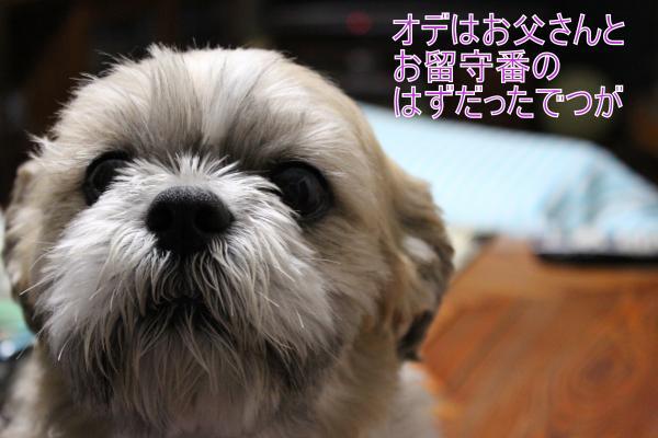 ・搾シ祢MG_5754_convert_20130601151018
