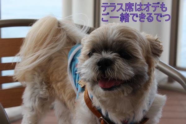 ・搾シ祢MG_5764_convert_20130604030536