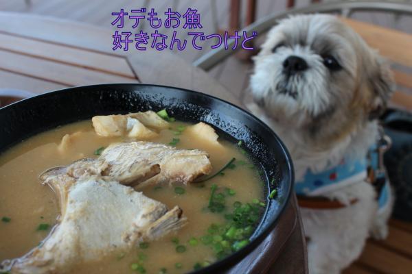 ・搾シ祢MG_5767_convert_20130604030550