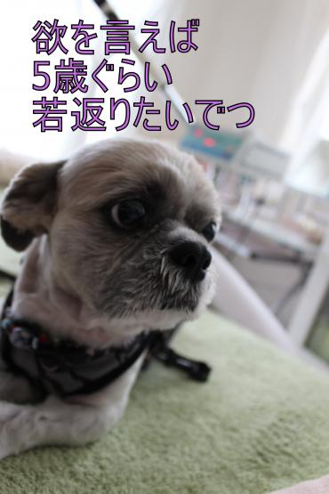 ・搾シ蝕MG_5941_convert_20130615220655