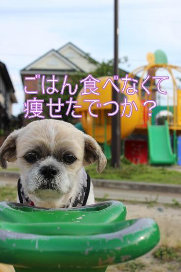 ・搾シ祢MG_6166_convert_20130620020116