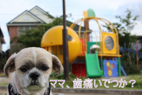 ・搾シ祢MG_6167_convert_20130620020133