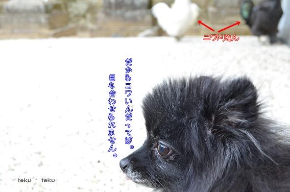 s_2014010223481437f.jpg