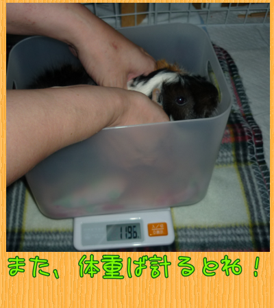 weight_2013_06_30.png