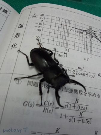 stag-beetle.jpg