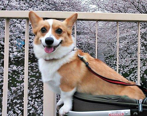 SMILE_20130401004906.jpg