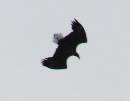 131027-4.jpg