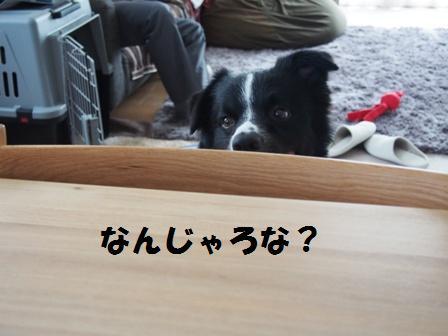 20130903_02.jpg