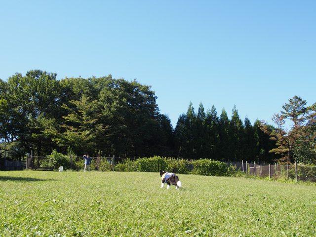 20130915_16_NASU_24.jpg