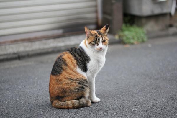 kyoumike.jpg