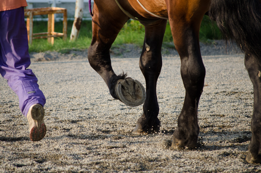 「馬足」の画像検索結果