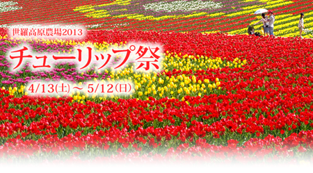 20130507tulipG02.png