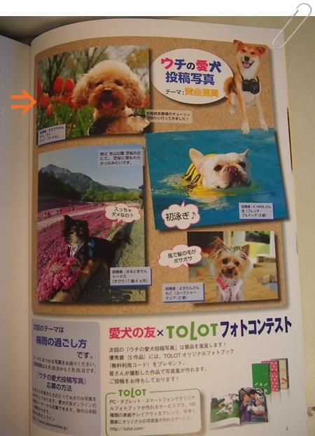 130701 5愛犬の友