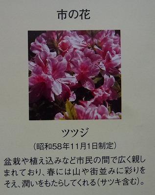 s-P1090461.jpg