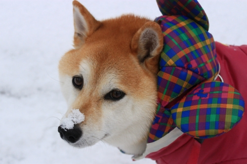華の鼻のっけ雪・クリック拡大
