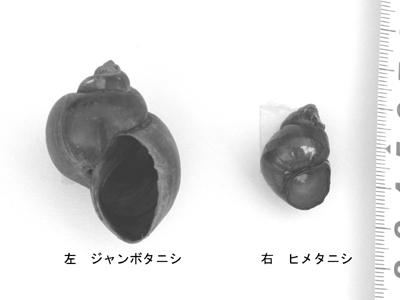 jyanbotanishi.jpg