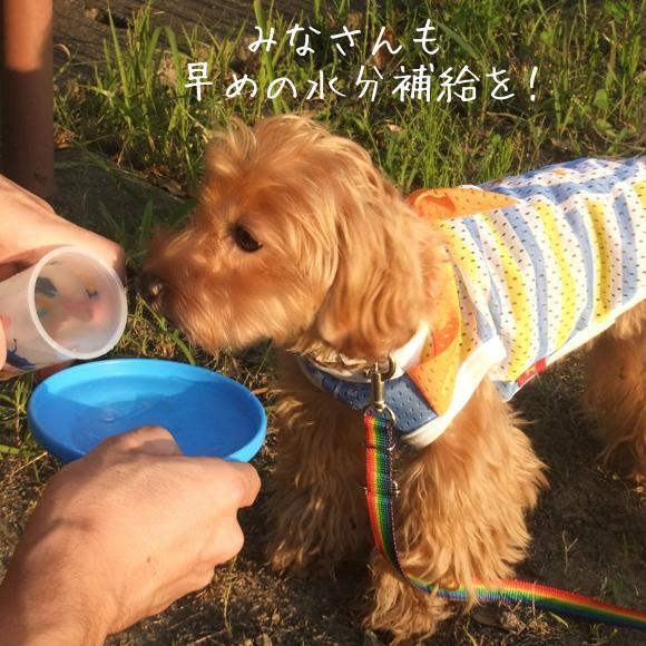 blog_import_51ba3730b8e98.jpg