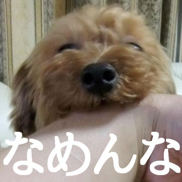 blog_import_51ba3741a5f92.jpg