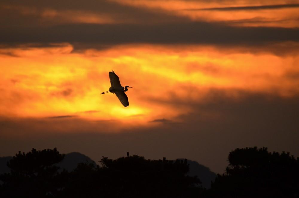 夕焼けに飛ぶ
