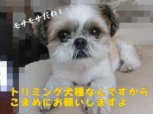 002-20130731-233957.jpg
