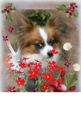 D13610d_flower-811.jpg