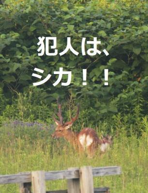 2013-07-19シカ畑襲う