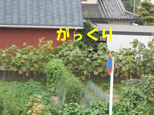 DSCN3448.jpg