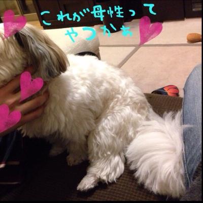 fc2blog_201401121841450be.jpg