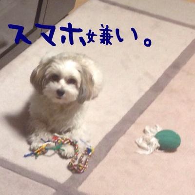 fc2blog_20140208210248699.jpg