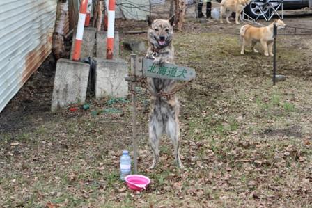 20130529 454北海道犬あおばweb小