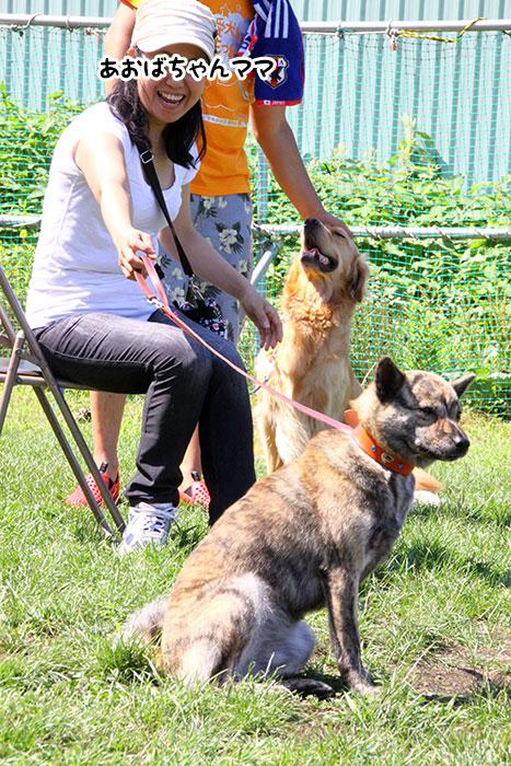 dogschool-summer-fes2013-34.jpg