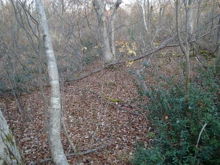 秋枯れの森