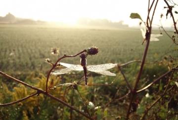 朝の景色 CAI_0097 (3)