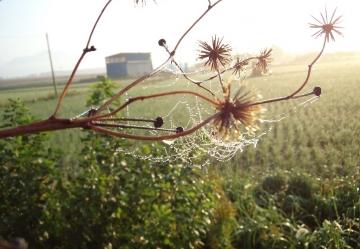 朝の景色 CAI_0097 (5)
