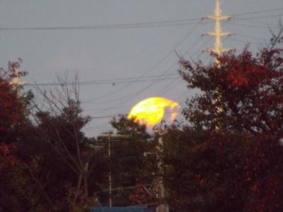 2014-11-07-0547.jpg