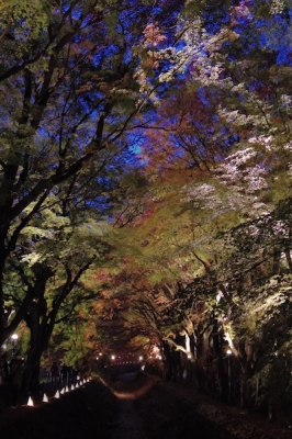 2014-11-10 -1659-kawaguchiko