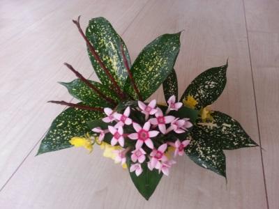 十一月の花②
