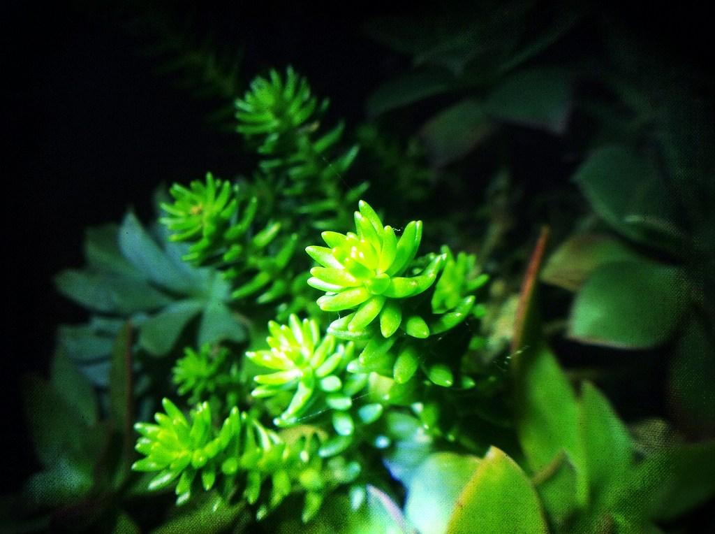 グリーンペット02