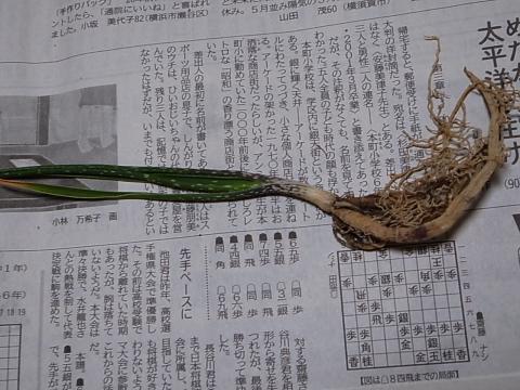 20130420_Aloe micracantha